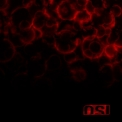 OSI - Blood (bonus Disc) '2009